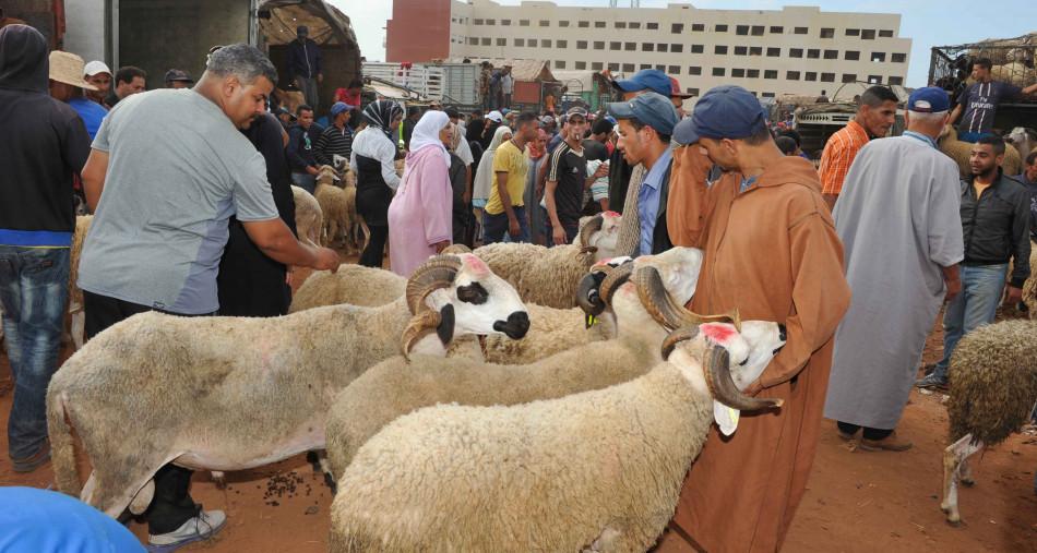 هكذا تحتفل الجالية السنغالية بعيد الأضحى في المغرب